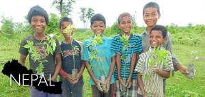 Projet de reforestation, Népal